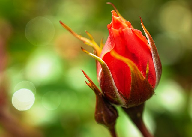 The Call carries the Promise gifted by the Rose